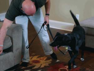 Bed bug dog inspection